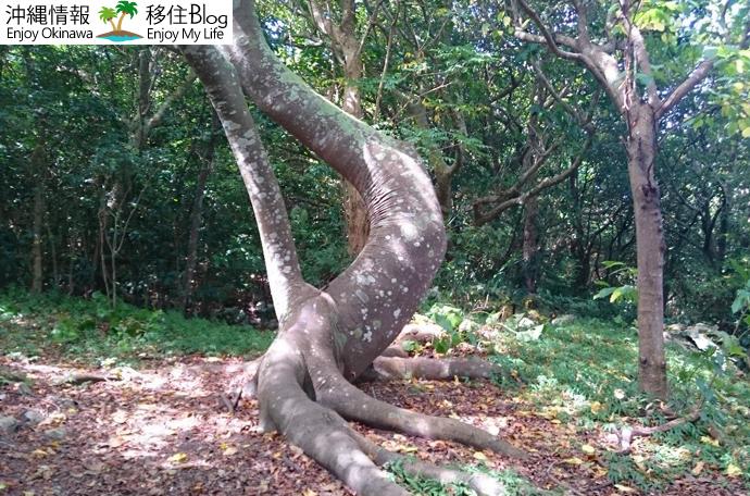 琵琶牧々が住む木