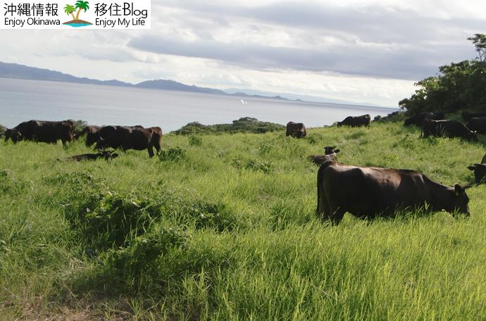 黒毛和牛の放牧地を抜けると…