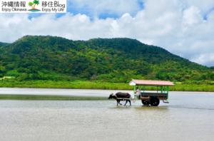 水牛で由布島