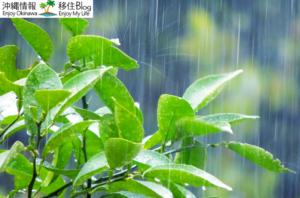 「沖縄の人は傘を差さない」を地元目線で検証してみる