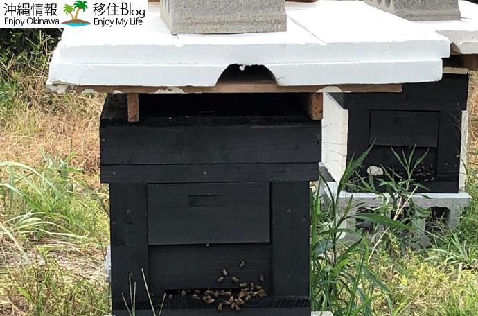 蜂を育てる